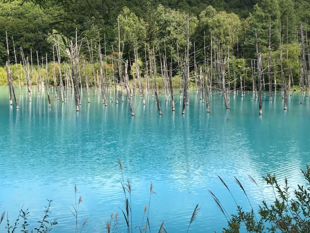 有日本九寨溝之稱的青池
